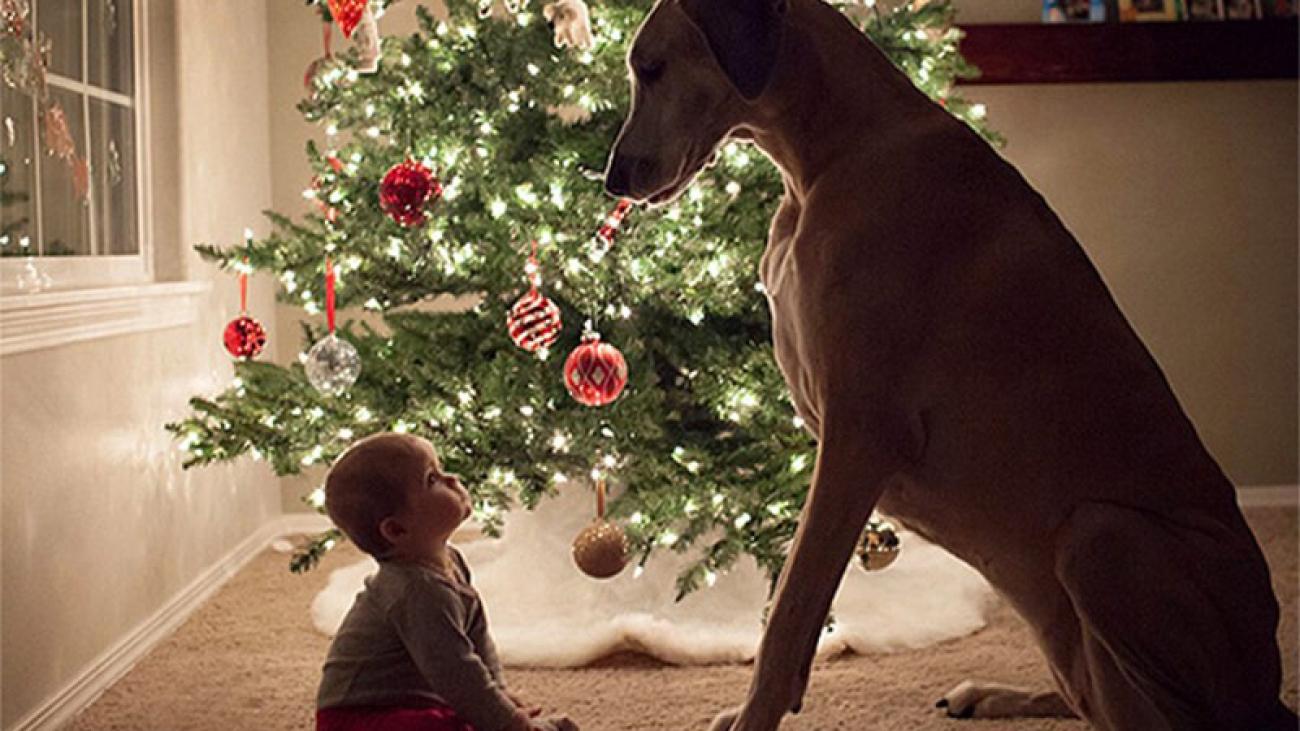 gyermek-kutyabiztos